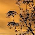 Sunrise Silhouette by Brent Short