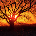 Sunset And Tree Silhouette 02 by Rob Graham