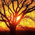 Sunset And Tree Silhouette 03 by Rob Graham