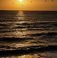 Sunrise Birds North Carolina by Robert Moorhead