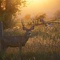 Sunset Deer by Susan Brown