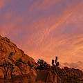 Sunset, Joshua Tree National Park by Angel La Canfora