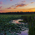 Sunset Over The Great Meadows In Concord Ma Lotus Bloom by Toby McGuire