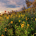 Sunset Wildflowers by Endre Balogh