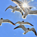 Sunshine And Seagulls by Charlotte Schafer