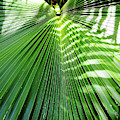 Sunshine On The Palm Frond by D Hackett