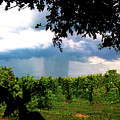 Super Cell Rain Shaft Southern Illinois by Jeff Kurtz