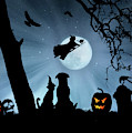 Super Cute Halloween Night With Dog And Cat by Stephanie Laird