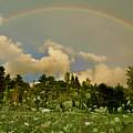 Surry Rainbow by John Meader