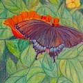 Swallowtail by Kendall Kessler