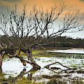 Swamp And Dead Tree by Hanna Tor