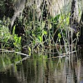 Swamp Reflection Of Reeds by Carol Groenen