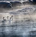 Swan Lake by Karen Wiles