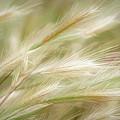 Swaying Grasses by Leda Robertson