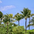 Swaying Palm Trees by Carol Groenen