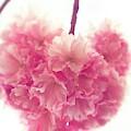 Sweet Heart Of Spring by The Art Of Marilyn Ridoutt-Greene