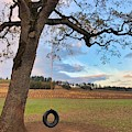 Swing In Tree by Brian Eberly