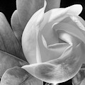 Swirling Scents Black And White by JC Findley