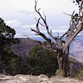 Swirly Tree by Mary Mikawoz