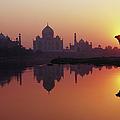 Taj Mahal & Silhouetted Camel & by Richard I'anson