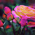 Tea Roses by Jessica Jenney