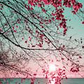 Teal And Fuchsia - Autumn Sunrise Reimagined by Georgia Mizuleva