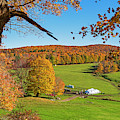 Tending To The Farm Woodstock Vermont Vt Vibrant Autumn Foliage Yellow And Orange by Toby McGuire