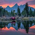 Teton Moose by Christian Heeb