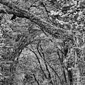 Texas Backroad Tunnel Black And White by JC Findley