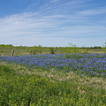 Texas Bluebonnets 6 by Andrea Anderegg