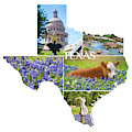 Texas State Shaped Collage by Lynn Bauer