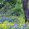 Texas Wildflowers 041119 by Rospotte Photography