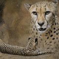 The Amazing Cheetah by Jai Johnson