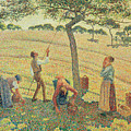 The Apple Harvest by Camille Pissarro
