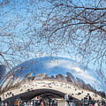 The Bean by Robin Zygelman