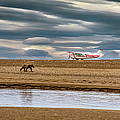The Bear And The Airplane by Lyl Dil Creations