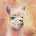The Charismatic Alpaca by Jai Johnson