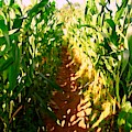 The Corn Maze #2 by Ed Weidman