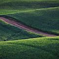 The Dirt Road by Kristen Wilkinson