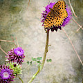 The Dream Of A Butterfly by Mary Lee Dereske