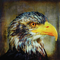 The Eagle by Angela Doelling AD DESIGN Photo and PhotoArt