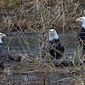 The Eagles by Randy Hall