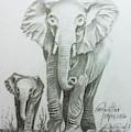 The Elephant by Mohammad Hayssam Kattaa