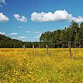 The Field by Joseph Noonan