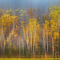 The Forest Awaits Dreamy Panorama by Debra and Dave Vanderlaan