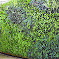 Leafy Green Wall by Bill Swartwout Photography