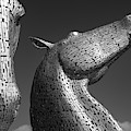 The Kelpies by Dave Bowman