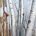 The Life Of The Wild Birch Trees In Oil Painting by Christopher Shellhammer