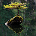 The Little Tree On Fairy Lake 5 by Bob Christopher
