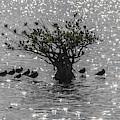 The Mangrove by Felix Lai